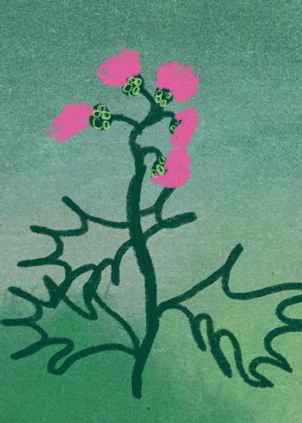 Distel gemalt